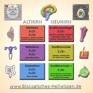 Tabelle BioLogisches Heilwissen Dresden